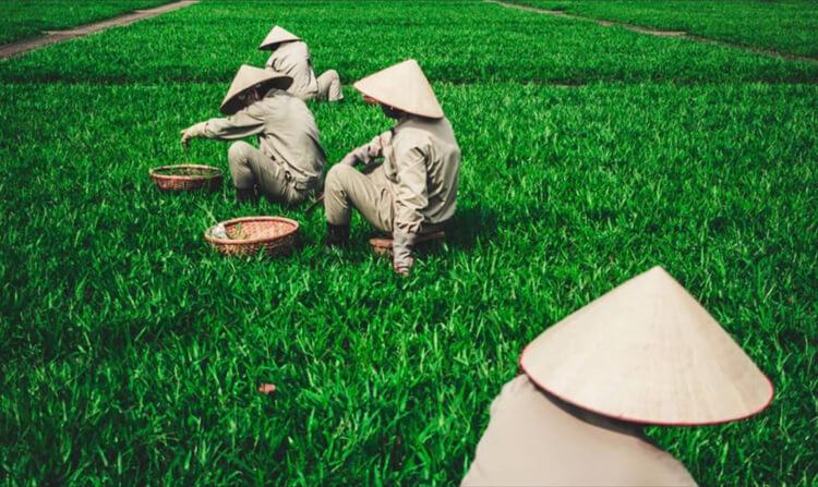 Фото чат Вьетнама